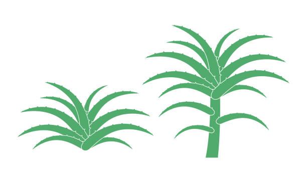 Aloe plant. Isolated  aloe on white background vector art illustration