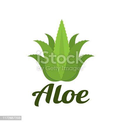 aloe. eps 10 vector file