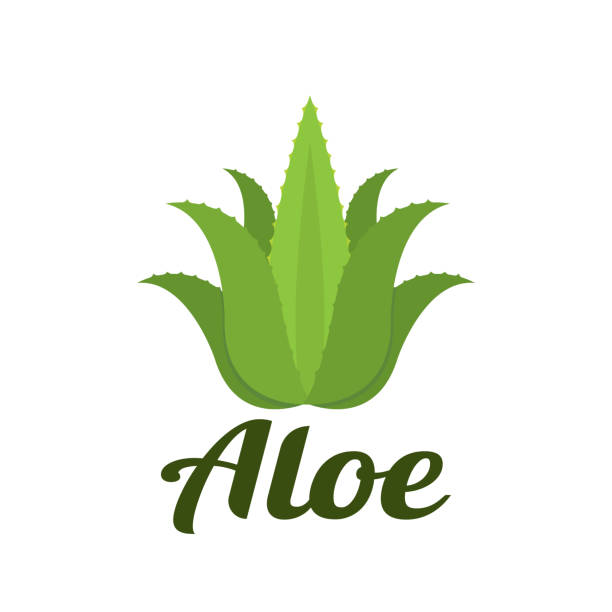 aloe - aloe vera stock illustrations