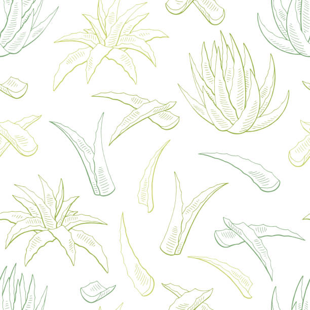 Aloe vera graphic color seamless pattern background sketch illustration vector vector art illustration