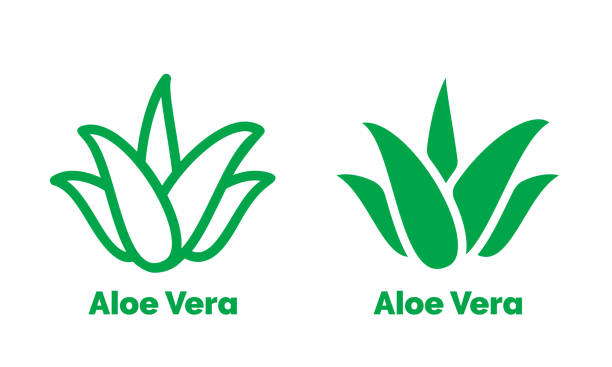 Aloe Vera green icon for natural organic product package label. Isolated Aloe Vera leaf sign for cosmetic or moisturizer cream packaging design template vector art illustration