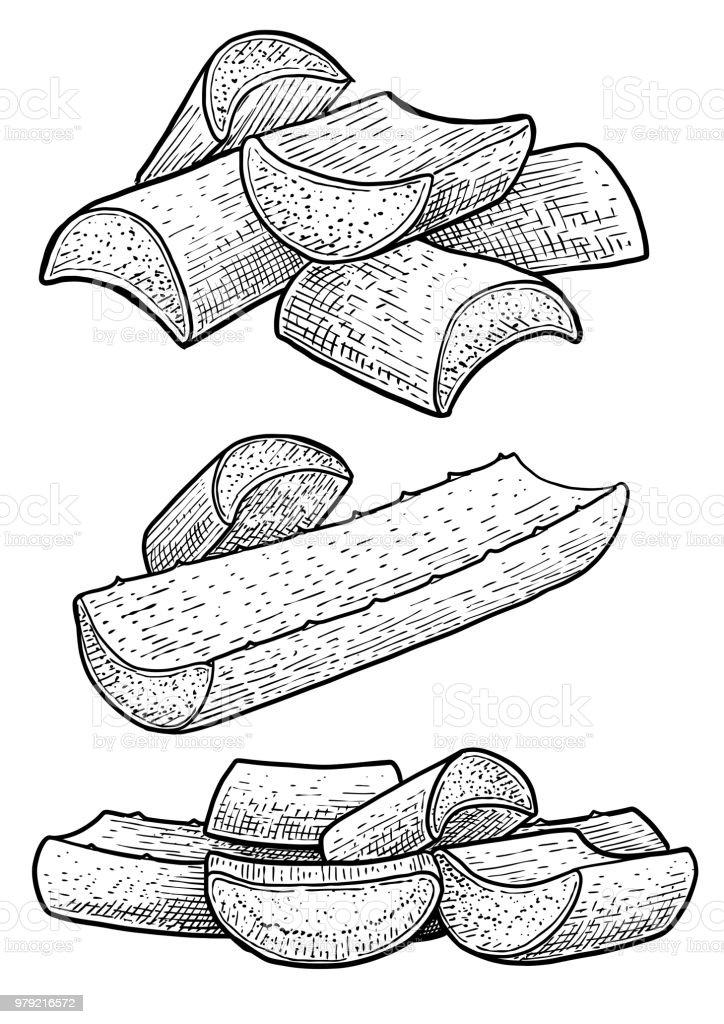 Feuille de l'Aloe vera, gel illustration, dessin, gravure, encre, dessin au trait, vecteur - Illustration vectorielle