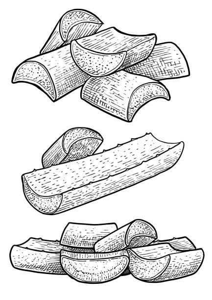 Aloe vera leaf, gel illustration, drawing, engraving, ink, line art, vector vector art illustration