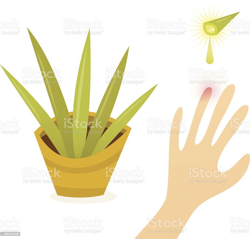 L'Aloe Vera, plante Miracle - Illustration vectorielle