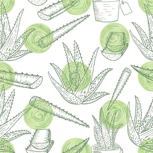 Aloe vera pattern vector art illustration