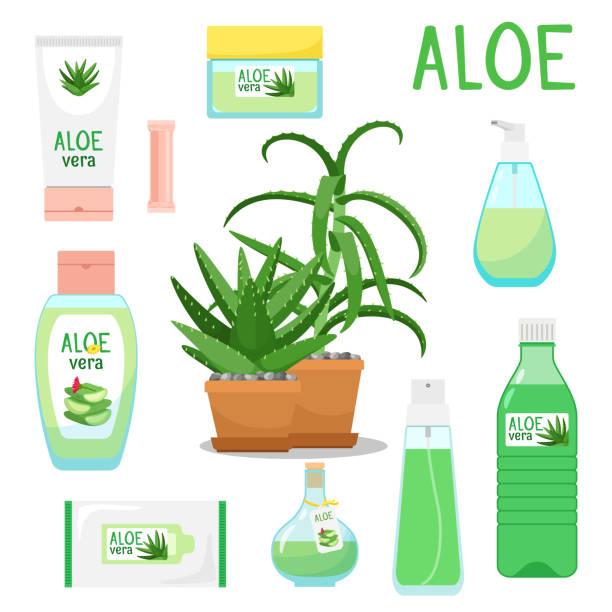 aloe vera plant and products - aloe vera stock illustrations