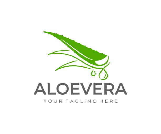 aloe vera plant design. herbaceous plant and drop vector design. aloe vera gel illustration - aloe vera stock illustrations