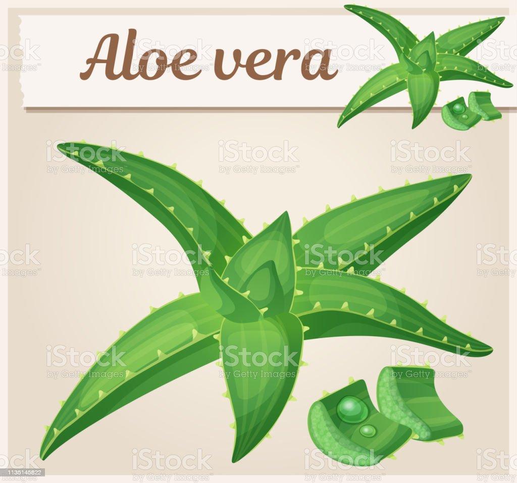 Illustration De Plante Aloe Vera Graphisme De Vecteur De