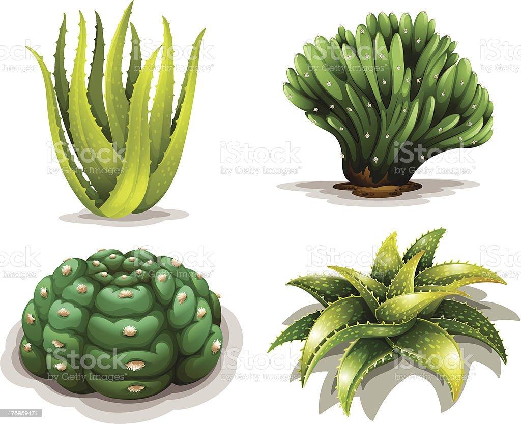 Aloe vera plants and cacti vector art illustration