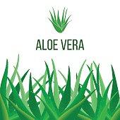 Aloe Vera poster with text. Herbal medicine
