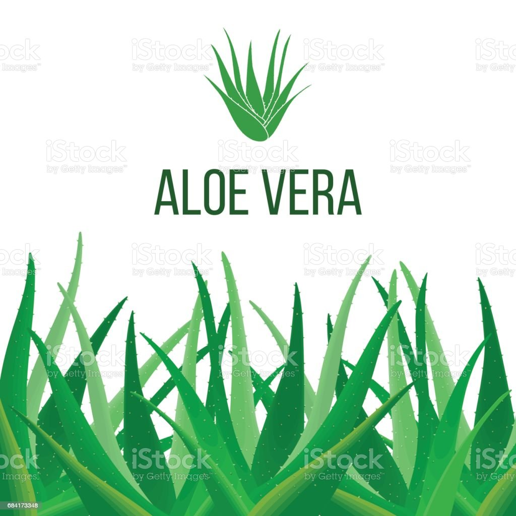 Aloe Vera poster with text. Herbal medicine vector art illustration