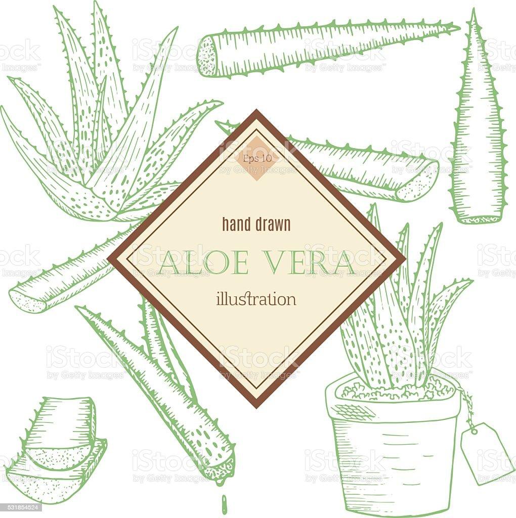 Ensemble à l'Aloe Vera - Illustration vectorielle