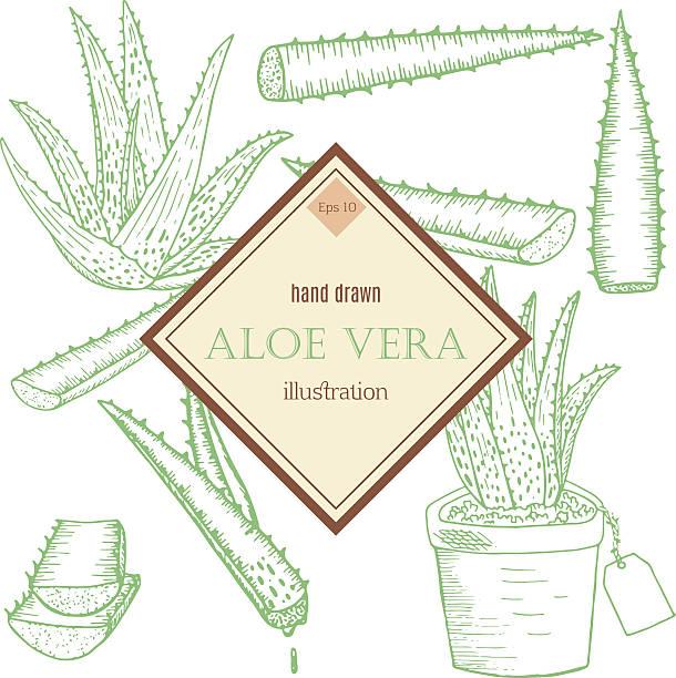 Aloe Vera set vector art illustration