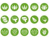 Aloe vera vector icon , illustration
