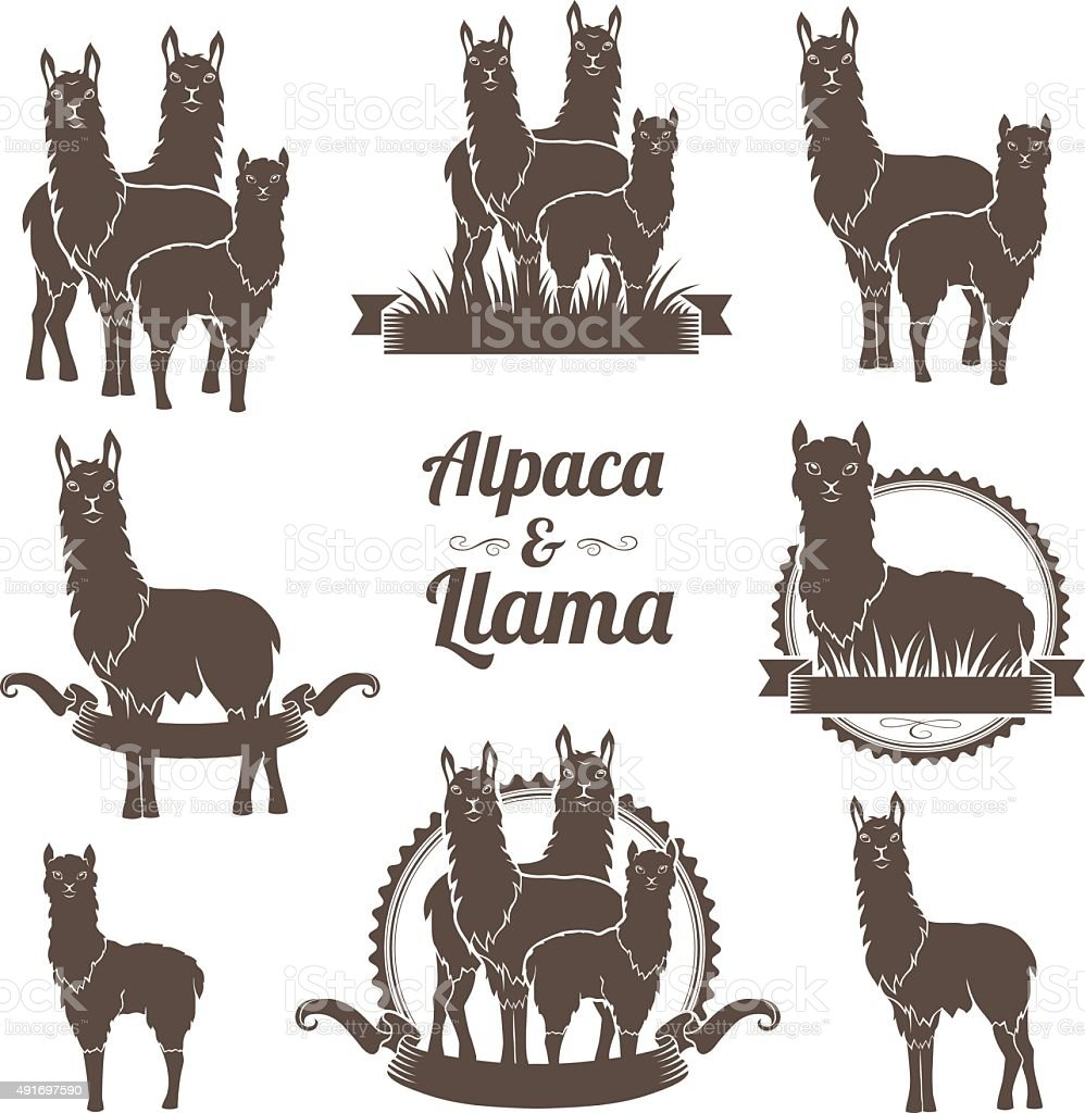 Alpaca and llamas emblems collection. vector art illustration