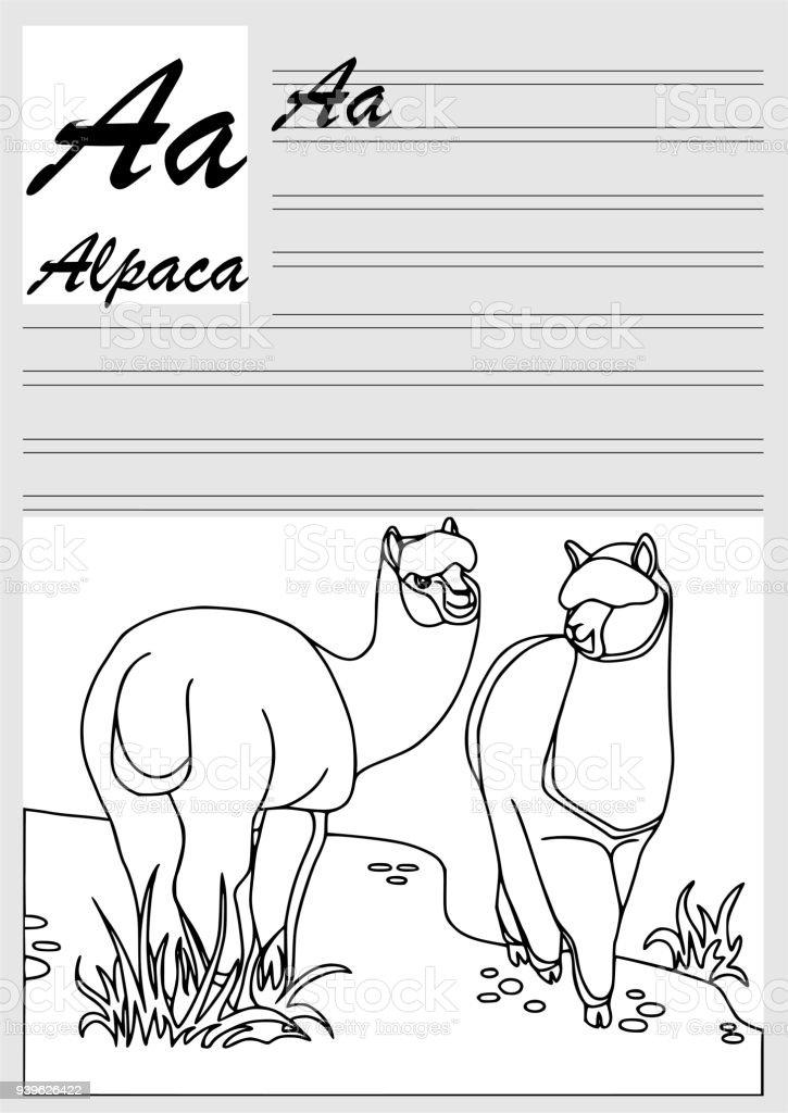 Alpaka Englische Alphabet Färbung Gliederung Schreiben Und Malen ...