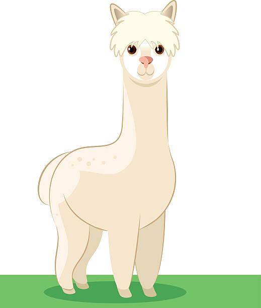 Alpaca Clip Art, Vector Images & Illustrations - iStock