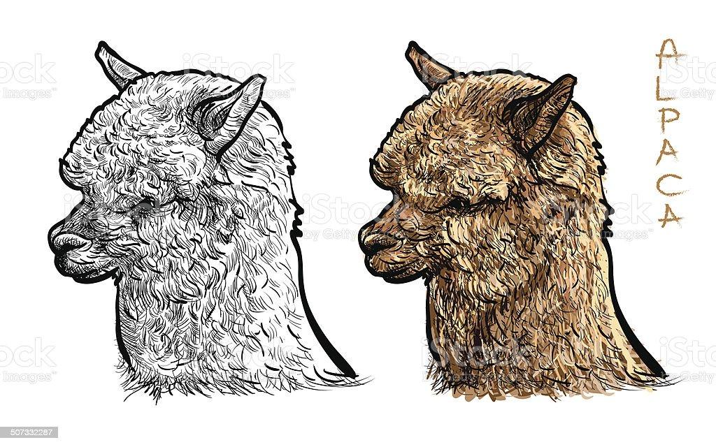 Alpaca vector art illustration