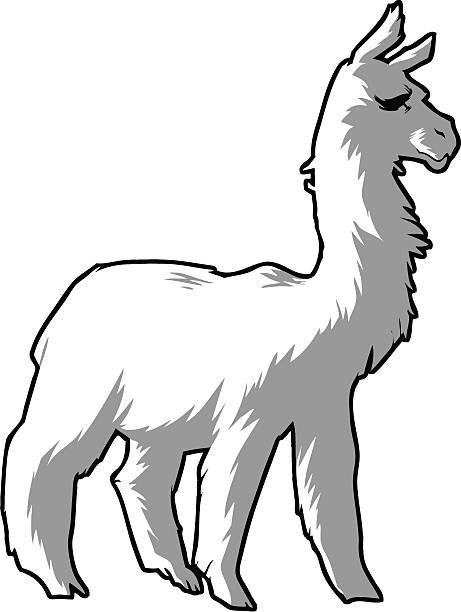 Royalty Free Alpaca Clip Art, Vector Images ...