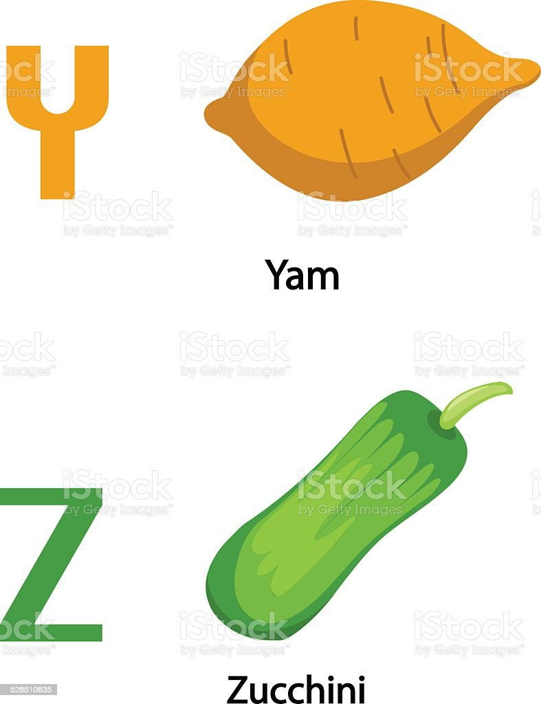 Alphabet Y-Z letter.yam,zucchini .vector vector art illustration