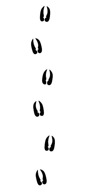 Alpine ibex or capricorn tracks - isolated black icon vector illustration on white background.