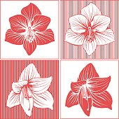 Amaryllis flower heads in ink drawing/line art style.