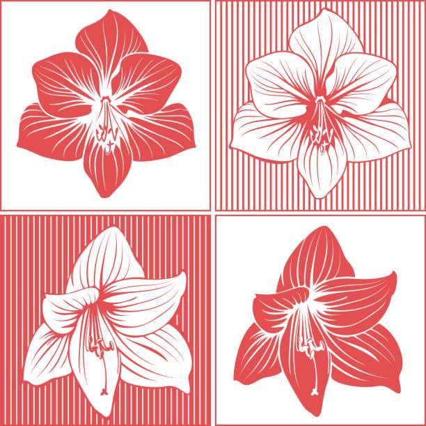 bildbanksillustrationer, clip art samt tecknat material och ikoner med amaryllis flower heads - amaryllis