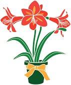 A vector illustration of an Amaryllis plant. Amaryllis flowers bloom around Christmas time.