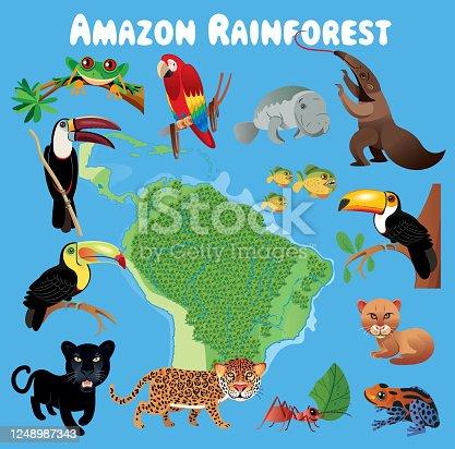 istock Amazon Rainforest and Animals 1248987343
