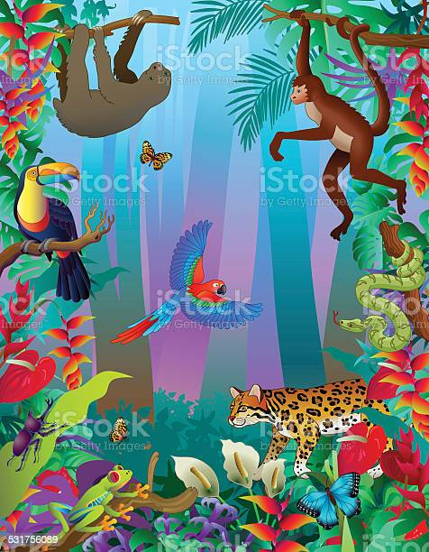 Amazon rainforest animals vertical jungle scene with many creatures vector id531756089?b=1&k=6&m=531756089&s=612x612&h=0934gy pwfsfe7mhjpmurz5xryp11ealp5qy pmanpk=