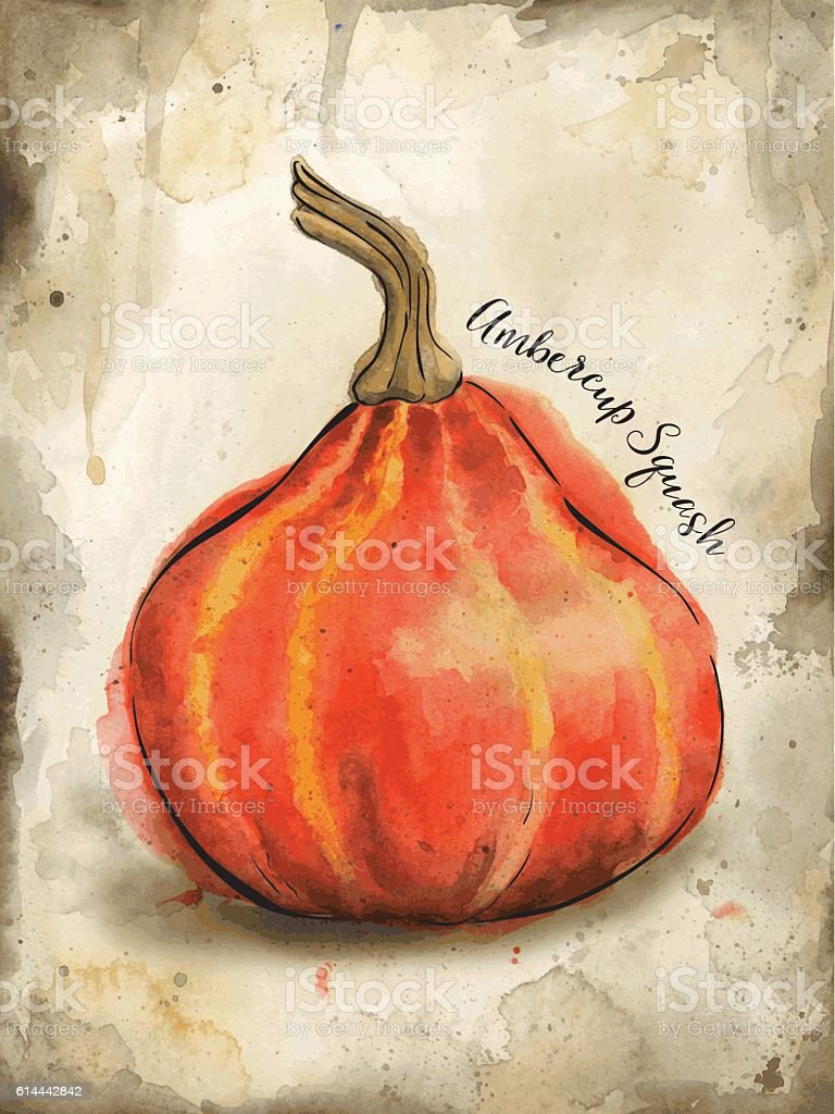 Ambercup Squash Painted in Watercolor - Vector Illustration vector art illustration
