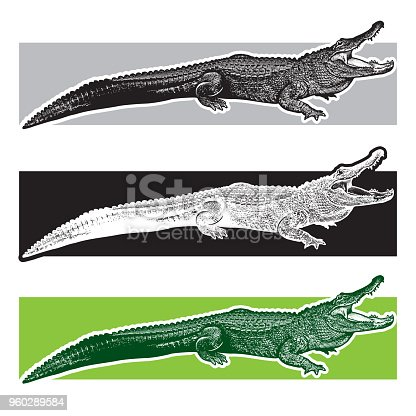 Monochrome vector graphic illustration of reptile - drawn graphic art in the engraving style, design element for logo or template.