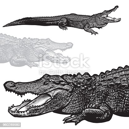 Black image of crocodilian reptile in engraving style isolated on white background, design element for logo or template.