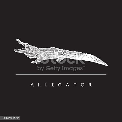 White illustration in engraving style of crocodilian reptile isolated on black background, design element for logo or template.