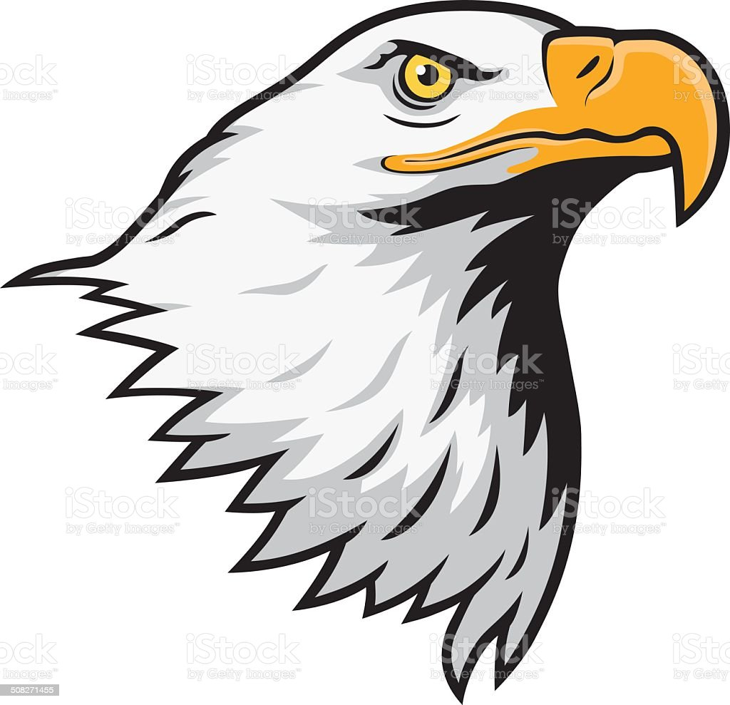 American bald eagle. vector art illustration