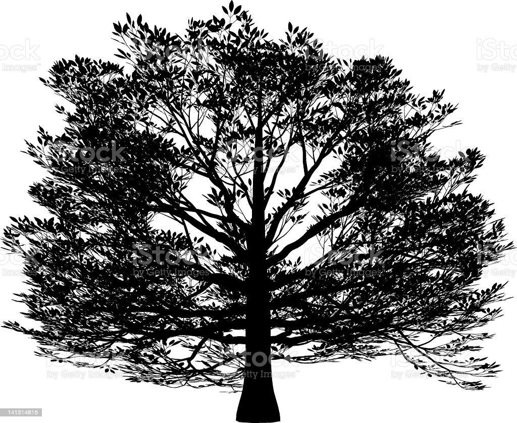 Haya Americana Illustracion Libre de Derechos 141314815 | iStock