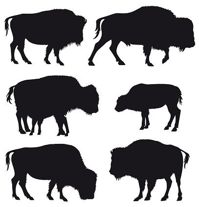 American Bison Buffallo Herd Silhouette Set