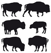 Set of black vector silhouettes of American Bison / Buffalo isolated on white background.