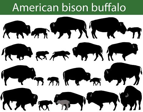 American bison buffalo silhouettes
