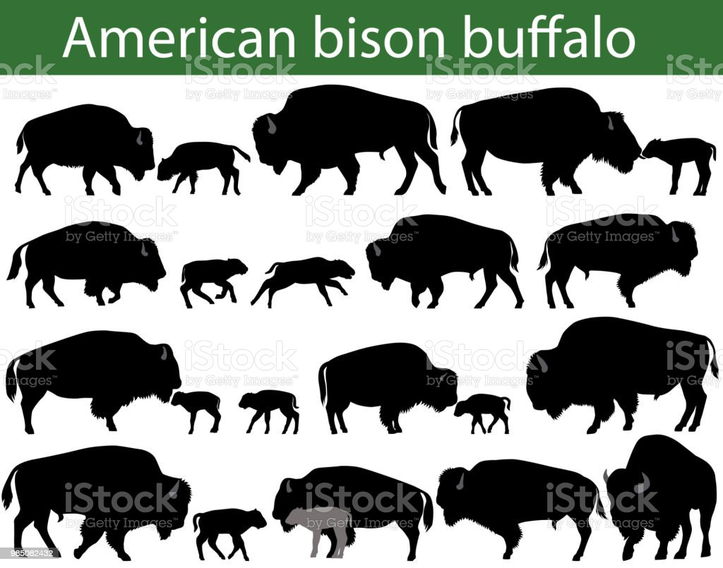 American bison buffalo silhouettes vector art illustration