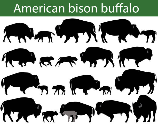 American bison buffalo silhouettes Collection of silhouettes of american bison, or buffalo american bison stock illustrations