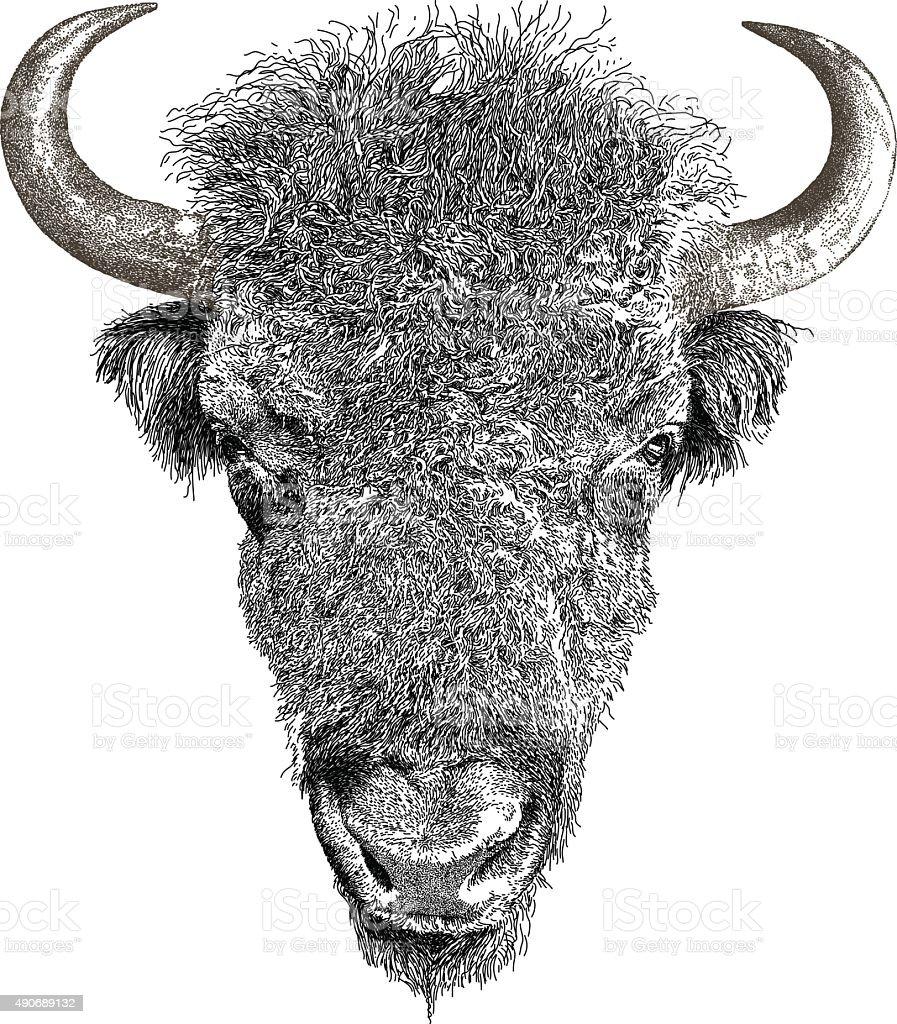 American Bison vector art illustration