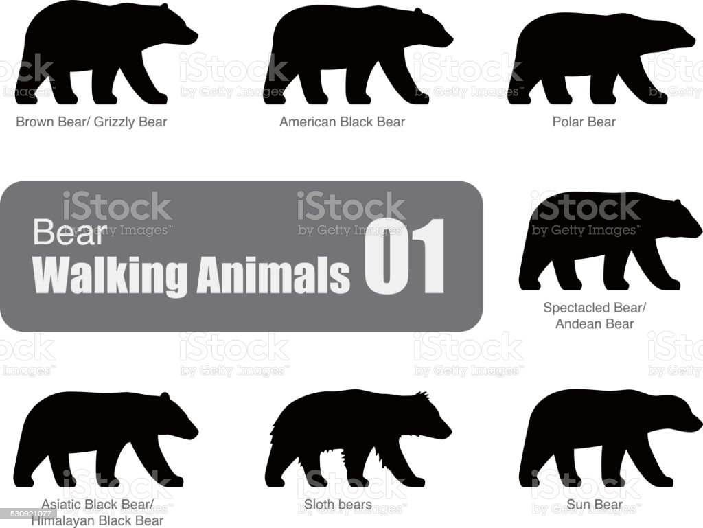 American black bear walking side flat 3D icon design vector art illustration