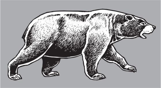 American Black Bear - Wild Animal