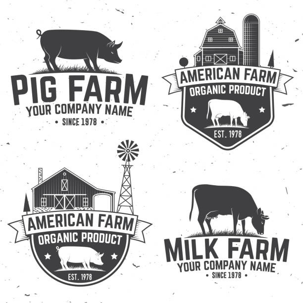 American Farm Badge or Label. Vector illustration American Farm Badge or Label. Vector illustration. Vintage typography design with cow, pig and farm house silhouette. Elements on the theme of the pork farm business. organic farm stock illustrations