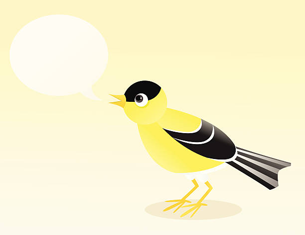 American Goldfinch A vector illustration of an American goldfinch with a blank speech bubble. The goldfinch, speech bubble, and background are all on separate layers. american goldfinch stock illustrations