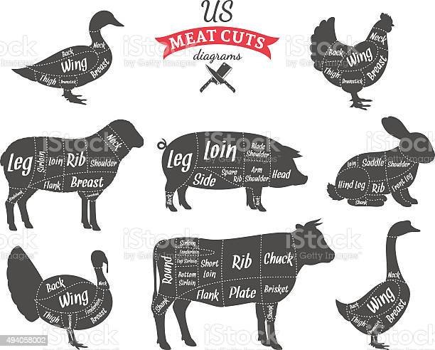 American meat cuts diagrams vector id494058002?b=1&k=6&m=494058002&s=612x612&h=kg8tmhlpfyzodbls3wywhdouwr 6vjcfxgygkx3z k8=
