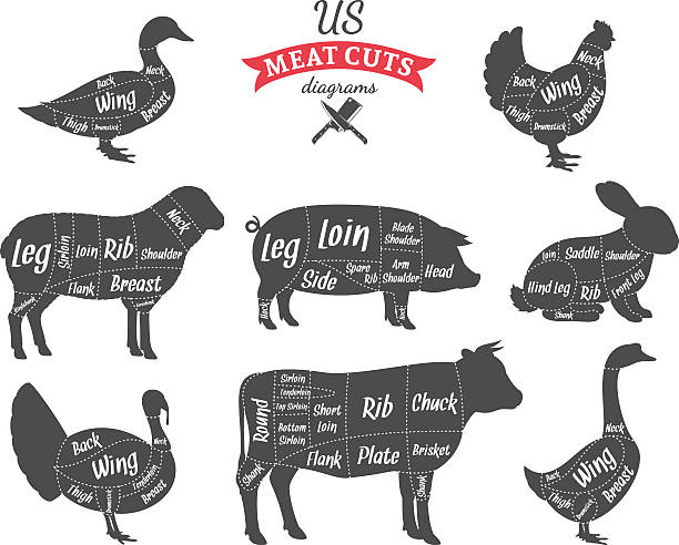 American (US) Meat Cuts Diagrams American (US) cuts of beef, pork, lamb, rabbit, chicken, duck, goose and turkey diagrams poultry stock illustrations