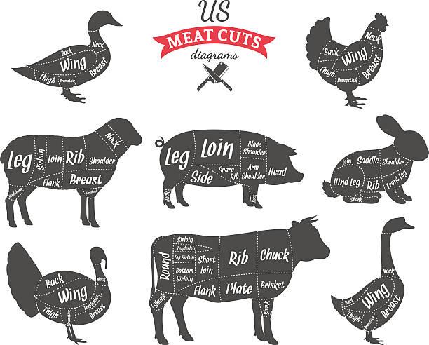 bildbanksillustrationer, clip art samt tecknat material och ikoner med american (us) meat cuts diagrams - fjäderfä