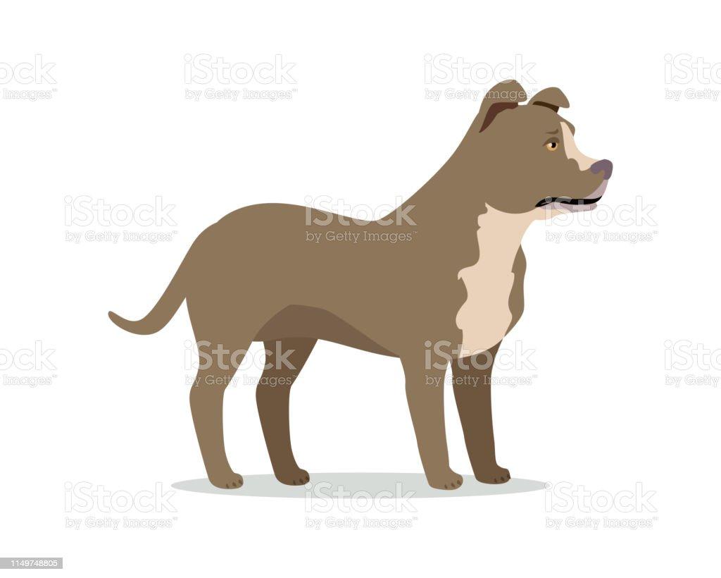 American Pit Bull Terrier Isolated on White vector art illustration